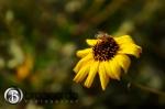 image of flower at dana point interpretive center