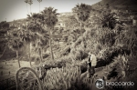 heisler park laguna beach engagement photos 0016